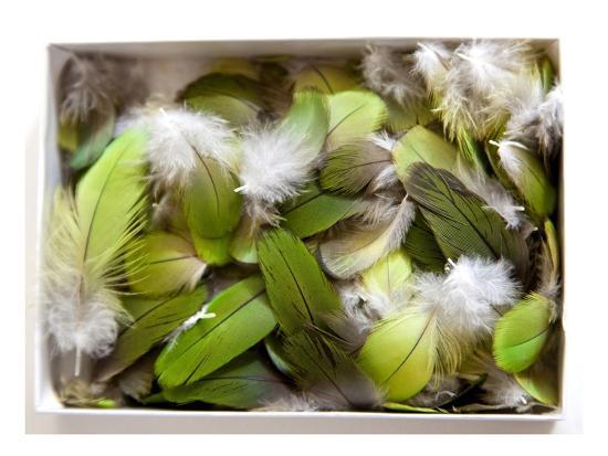 judy-tuwaletstiwa-parrot-feathers-no-3