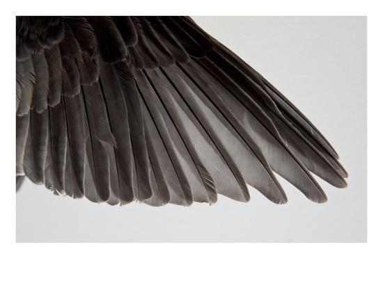 judy-tuwaletstiwa-robin-wing