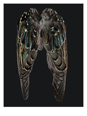 judy-tuwaletstiwa-starling-wings