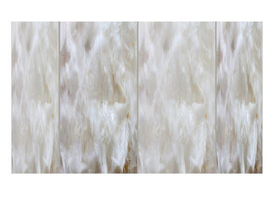 judy-tuwaletstiwa-white-feathers