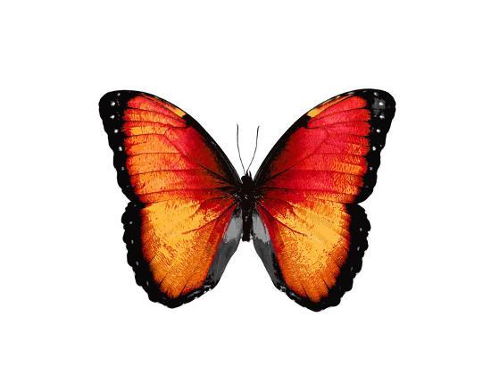 julia-bosco-vibrant-butterfly-vi