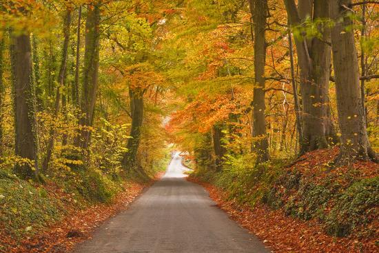 julian-elliott-autumn-colours-in-the-beech-trees-on-the-road-to-turkdean-in-the-cotwolds