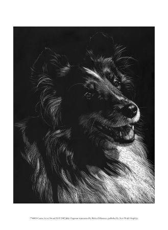 julie-chapman-canine-scratchboard-xi