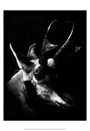 julie-chapman-wildlife-scratchboards-ii