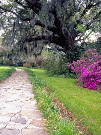 julie-eggers-pathway-in-magnolia-plantation-and-gardens-charleston-south-carolina-usa