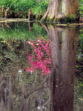 julie-eggers-reflections-in-pond-magnolia-plantation-and-gardens-charleston-south-carolina-usa