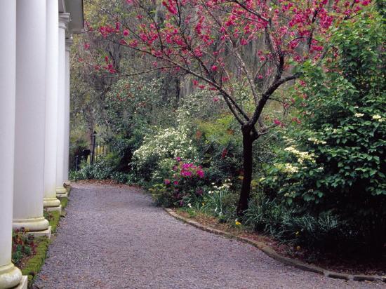 julie-eggers-walkway-in-gardens-magnolia-plantation-and-gardens-charleston-south-carolina-usa