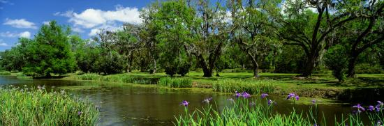 jungle-gardens-avery-island-southern-louisiana-usa