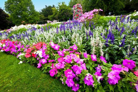 juriah-pretty-manicured-flower-garden-with-colorful-azaleas