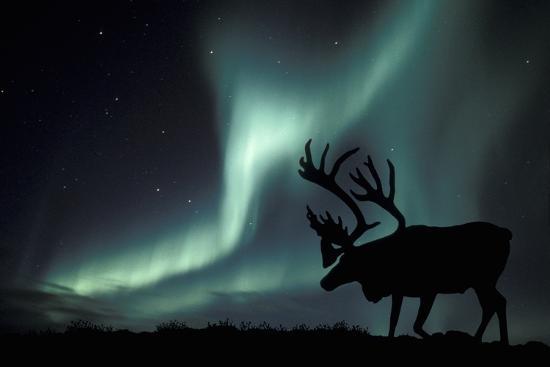 kaj-svensson-aurora-borealis-and-caribou