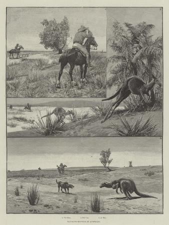 kangaroo-hunting-in-australia