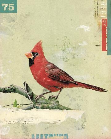 kareem-rizk-bird-iv
