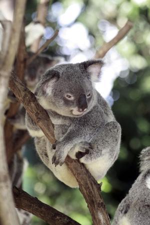karen-williams-australia-4