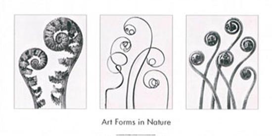 karl-blossfeldt-art-forms-in-nature-i