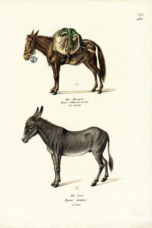 karl-joseph-brodtmann-donkey-1824