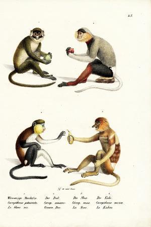 karl-joseph-brodtmann-lesser-white-nosed-monkey-1824