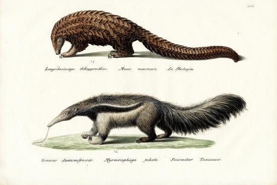 karl-joseph-brodtmann-pangolin-anteater-1824