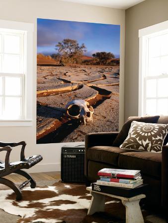 karl-lehmann-cracked-mud-dunes-and-monkey-skull-in-namib-desert-near-sossusvlei