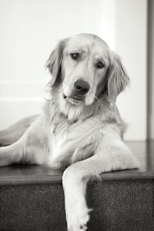 karyn-millet-goldie-ii-black-and-white