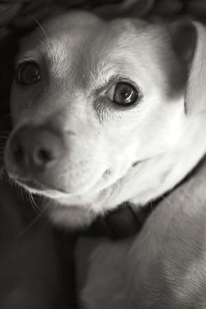 karyn-millet-second-glance-black-and-white