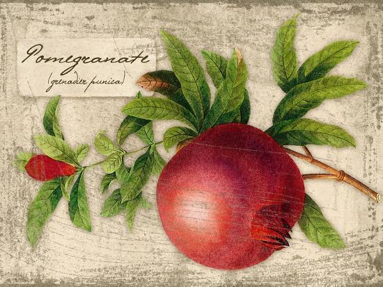 kate-ward-thacker-pomegranate