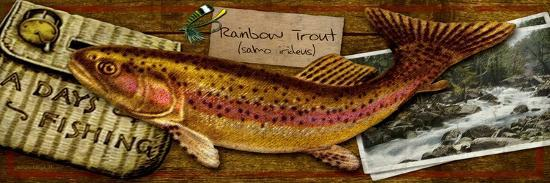 kate-ward-thacker-rainbow-trout