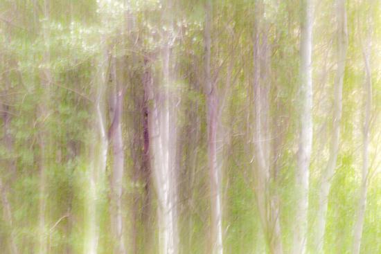 kathy-mahan-aspen-blur-iii