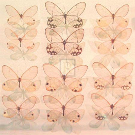 katja-marzahn-floating-butterfly