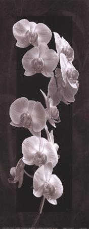 katrina-craven-orchid-opulence-i