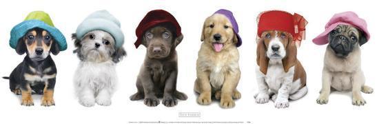keith-kimberlin-hat-hounds