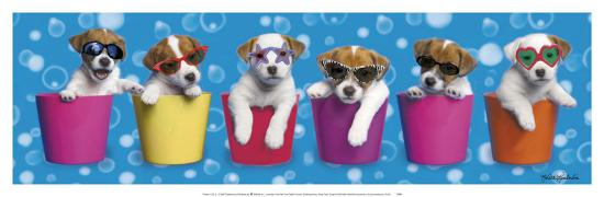 keith-kimberlin-shady-pups