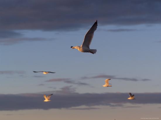 keith-levit-lake-scenes-birds-at-sunset