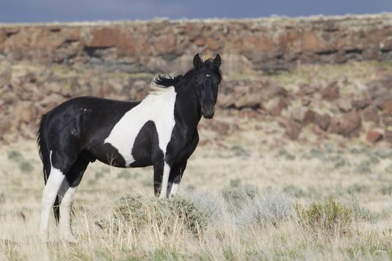 ken-archer-wild-horse-steens-mountains