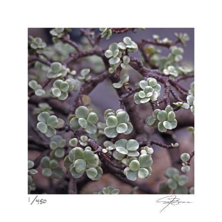 ken-bremer-succulent-13