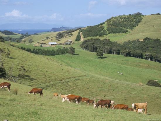 ken-gillham-middle-island-farm-waiheke-island-hauraki-gulf-north-island-new-zealand