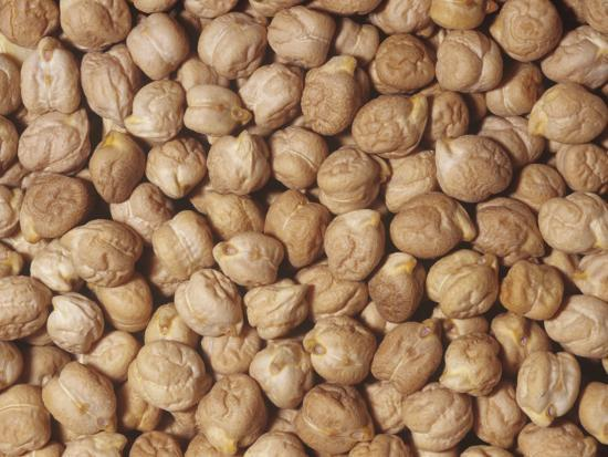 ken-lucas-garbanzo-beans-or-chick-peas-cicer-arietinum-native-to-the-middle-east