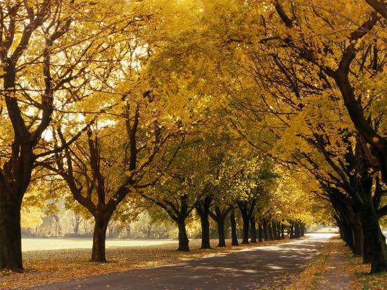 ken-wardius-maple-tree-grove-in-park-wi