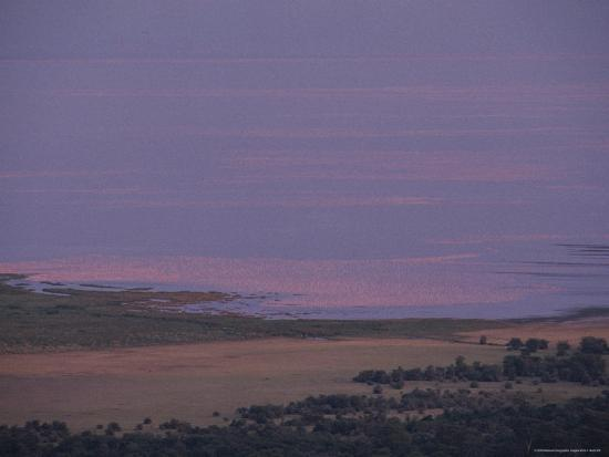 kenneth-garrett-thousands-of-flamingoes-give-a-pink-cast-to-tanzanias-lake-manyara