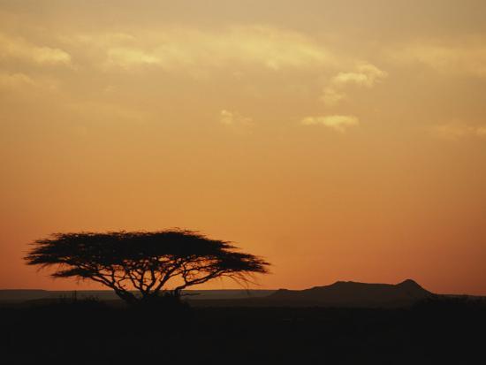kenneth-garrett-twilight-view-of-a-lone-tree-on-the-savanna