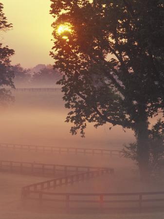 kent-foster-foggy-sunrise-on-horse-farm-kentucky