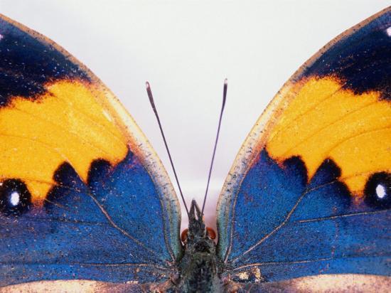 keren-su-detail-of-a-butterfly-body-and-wings-wolong-ziran-baohuqu-china