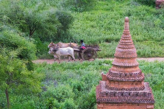 keren-su-farmer-driving-an-ox-cart-bagan-mandalay-region-myanmar