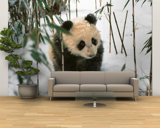 keren-su-panda-cub-on-snow-wolong-sichuan-china
