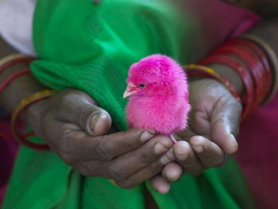 keren-su-woman-and-chick-painted-with-holy-color-orissa-india