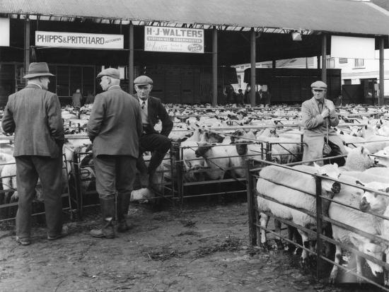 kidderminster-sheep-fair