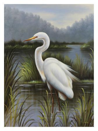 kilian-morning-egret