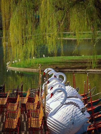 kindra-clineff-swan-boats-the-public-garden-boston-ma