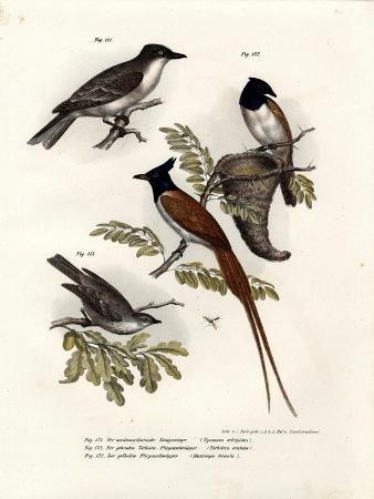 king-bird-1864