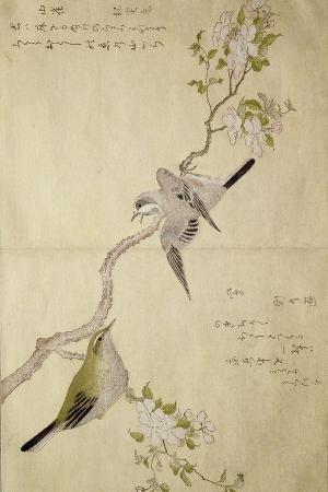 kitagawa-utamaro-p-332-1946-vol-1-f-2-tit-on-a-bough-on-the-right-and-a-bush-warbler-on-a-branch-on-the-left-from