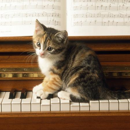 kitten-playing-on-piano